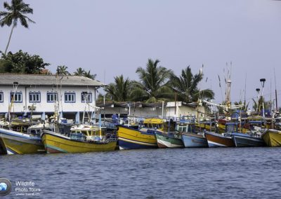 Local fishing boats inside the harbour, Mirissa, Sri Lanka, Indian Ocean